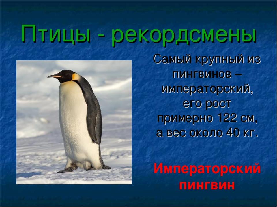 Птицы - рекордсмены Самый крупный из пингвинов – императорский, его рост прим...