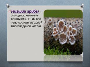 Низшие грибы – это одноклеточные организмы. У них все тело состоит из одной м