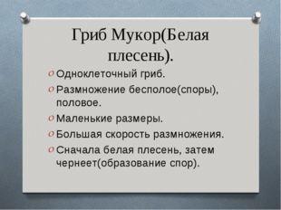 Гриб Мукор(Белая плесень). Одноклеточный гриб. Размножение бесполое(споры), п