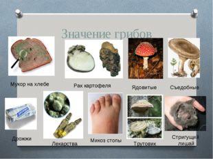 Значение грибов Мукор на хлебе Рак картофеля Ядовитые Съедобные Дрожжи Лекарс
