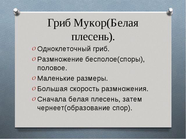 Гриб Мукор(Белая плесень). Одноклеточный гриб. Размножение бесполое(споры), п...