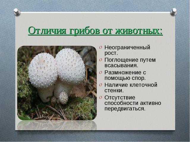 Отличия грибов от животных: Неограниченный рост. Поглощение путем всасывания....