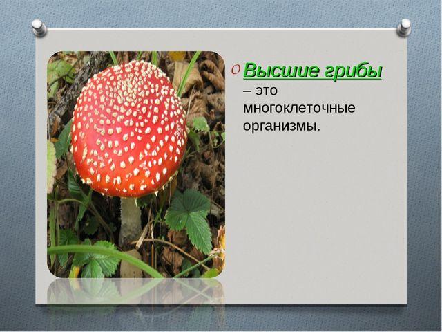 Высшие грибы – это многоклеточные организмы.