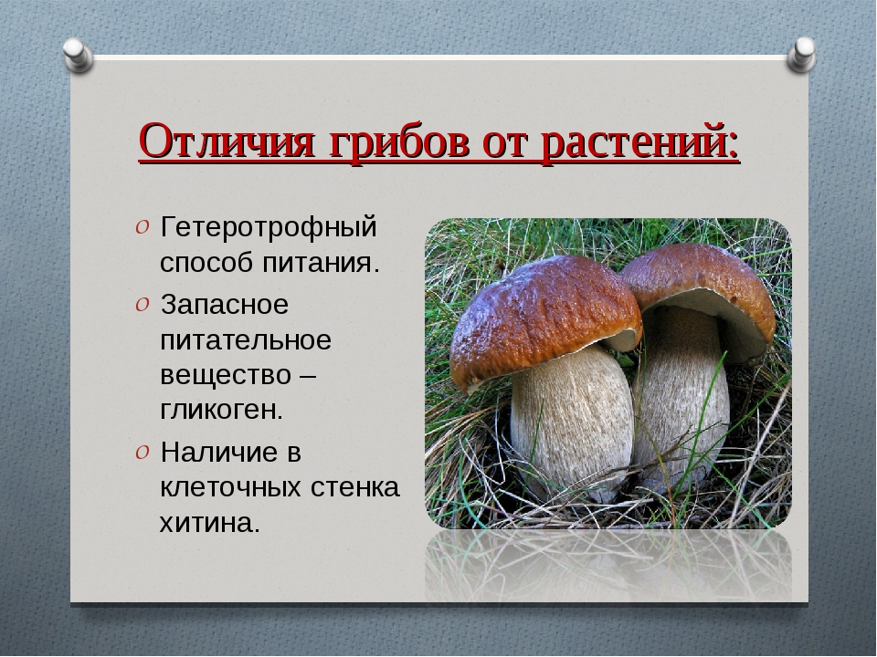 Отличия грибов от растений: Гетеротрофный способ питания. Запасное питательно...