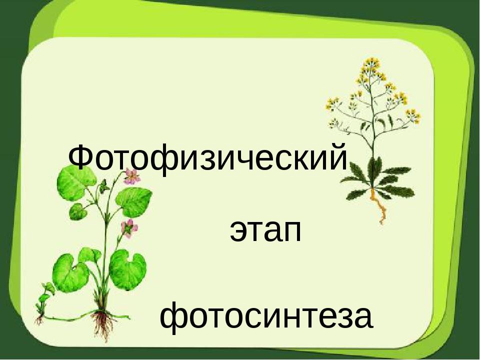 Фотофизический этап фотосинтеза