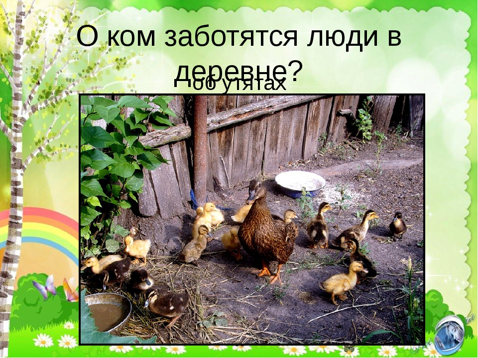 О ком заботятся люди в деревне? об утятах