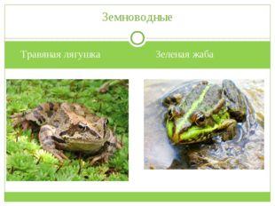Травяная лягушка Зеленая жаба Земноводные