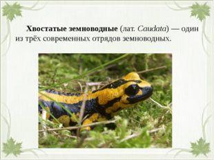 Хвостатые земноводные(лат.Caudata)— один из трёх современных отрядов зем