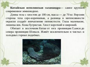 Китайская исполинская саламандра— самое крупное современное земноводное. Д