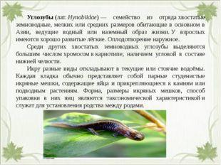 Углозубы(лат.Hynobiidae)— семейство из отрядахвостатые земноводные, мел