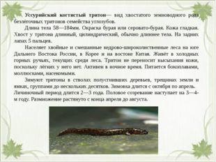 Уссурийский когтистый тритон— вид хвостатого земноводного рода безлёгочных