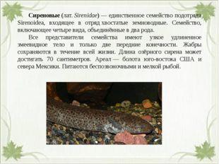 Сиреновые(лат.Sirenidae)— единственное семейство подотряда Sirenoidea, в