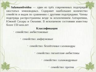 Salamandroidea — один из трёх современных подотрядов хвостатых земноводных.
