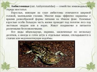 Амбистомовые (лат. Ambystomatidae) — семейство земноводных из отряда хвоста