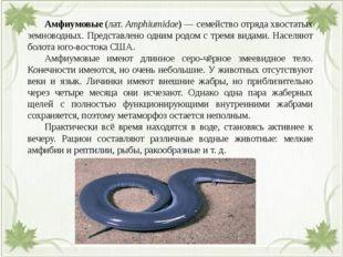 Амфиумовые(лат.Amphiumidae)— семейство отрядахвостатых земноводных. Пре