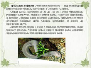 Трёхпалая амфиума (Amphiuma tridactylum)— вид земноводных семействаамфиум