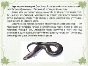 Угревидная амфиума (лат. Amphiuma means) — вид земноводных семейства амфиум