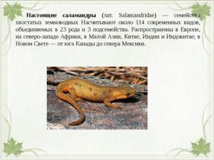 Настоящие саламандры (лат. Salamandridae) — семейство хвостатых земноводных