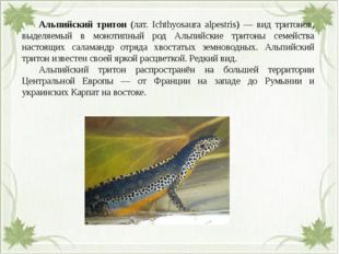 Альпийский тритон (лат. Ichthyosaura alpestris) — вид тритонов, выделяемый