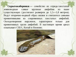 Скрытожаберники— семейство из отрядахвостатые земноводные самые крупные а