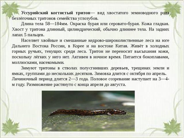Уссурийский когтистый тритон— вид хвостатого земноводного рода безлёгочных...