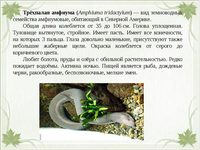 Трёхпалая амфиума (Amphiuma tridactylum)— вид земноводных семействаамфиум...