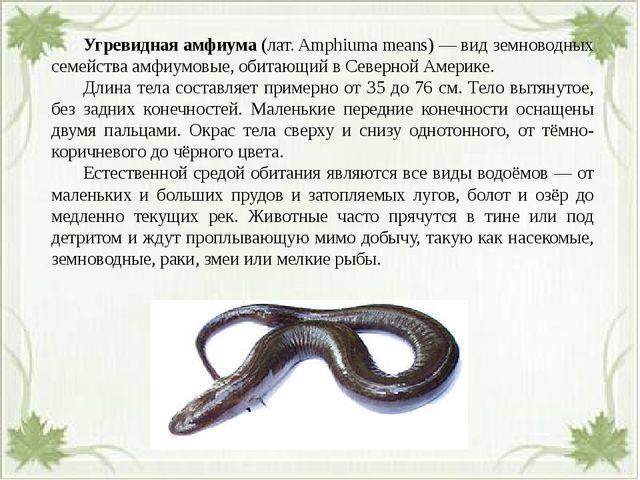 Угревидная амфиума (лат. Amphiuma means) — вид земноводных семейства амфиум...