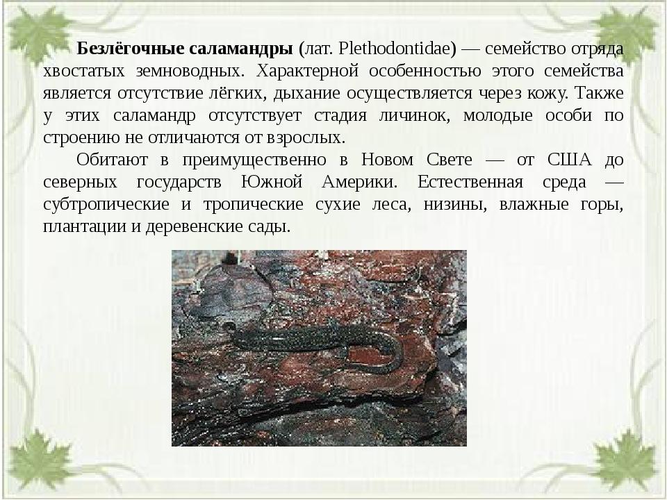 Безлёгочные саламандры (лат. Plethodontidae) — семейство отряда хвостатых з...