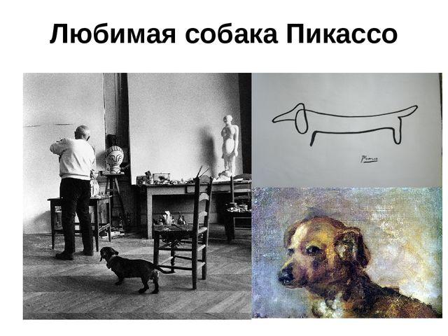 Любимая собака Пикассо