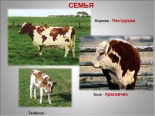 СЕМЬЯ Корова - Пеструшка Бык - Красавчик Телёнок - Малыш
