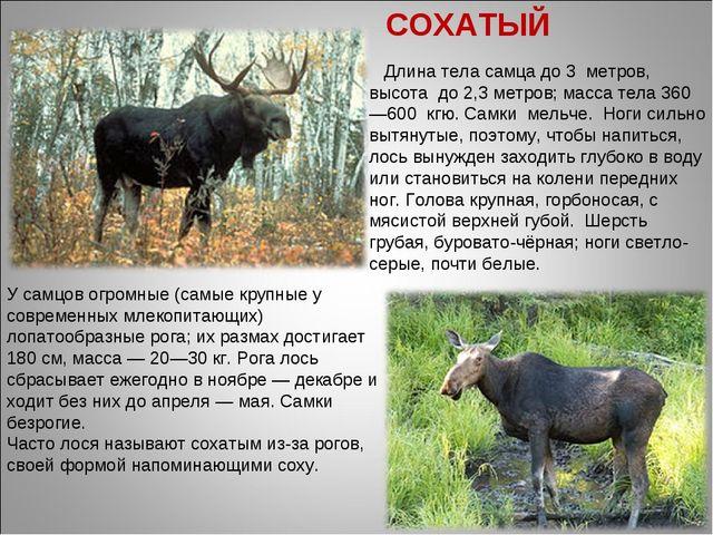 Длина тела самца до 3 метров, высота до 2,3метров; масса тела 360—600 кгю....