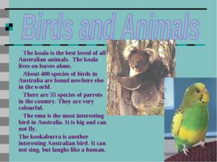 The koala is the best loved of all Australian animals. The koala lives on le