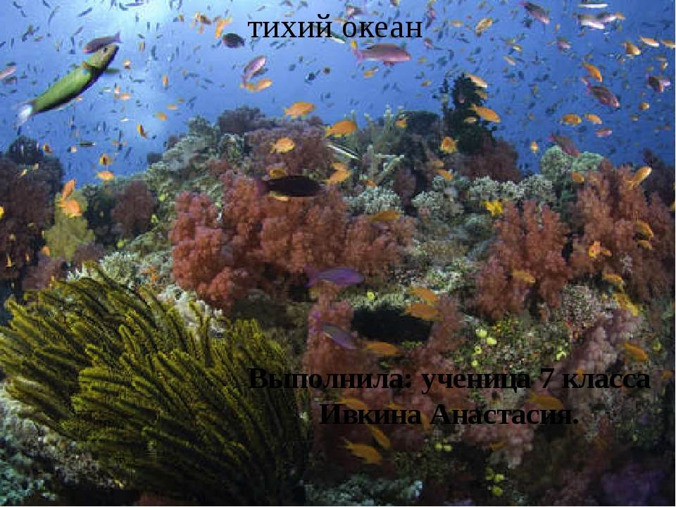 тихий океан Выполнила: ученица 7 класса Ивкина Анастасия.
