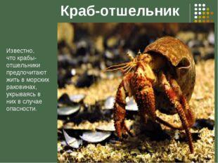 Краб-отшельник Известно, что крабы-отшельники предпочитают жить в морских рак