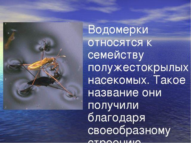 Водомерки относятся к семейству полужестокрылых насекомых. Такое название они...