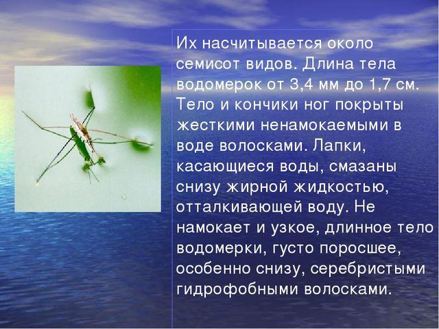 Их насчитывается около семисот видов. Длина тела водомерок от 3,4 мм до 1,7 с...