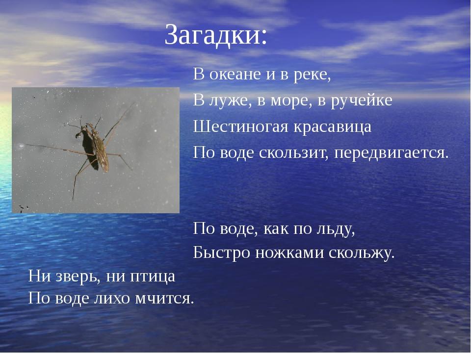 Загадки: В океане и в реке, В луже, в море, в ручейке Шестиногая красавица По...