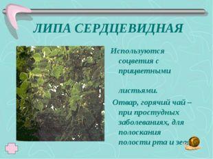 ЛИПА СЕРДЦЕВИДНАЯ Используются соцветия с прицветными листьями. Отвар, горячи