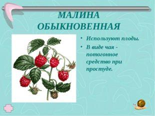 МАЛИНА ОБЫКНОВЕННАЯ Используют плоды. В виде чая - потогонное средство при пр