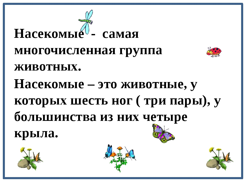 Насекомые - самая многочисленная группа животных. Насекомые – это животные,...