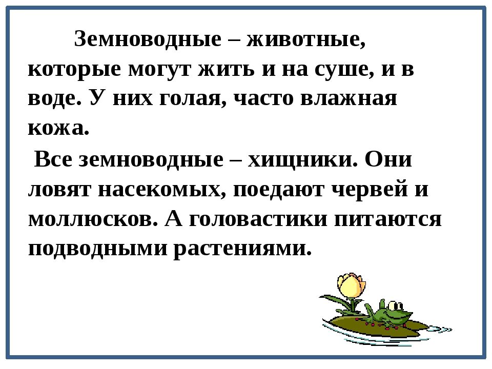 Земноводные – животные, которые могут жить и на суше, и в воде. У них голая,...