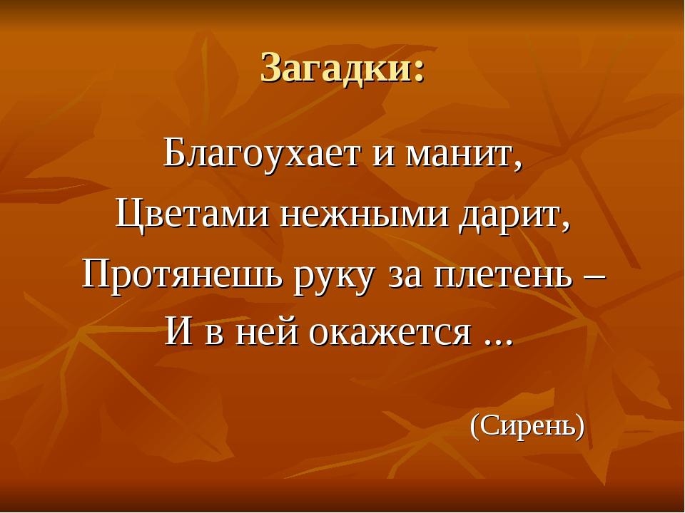 Загадки: Благоухает и манит, Цветами нежными дарит, Протянешь руку за плетень...