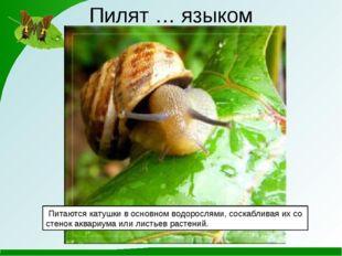 Пилят … языком Питаются катушки в основном водорослями, соскабливая их со ст