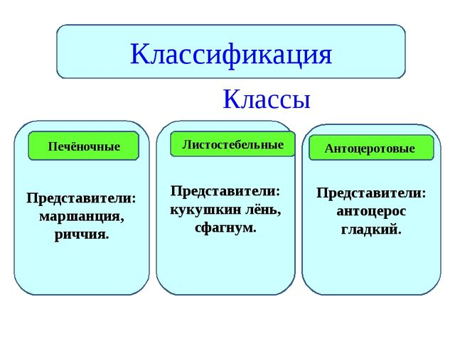 Классы Классификация Представители: маршанция, риччия. Представители: кукушк...