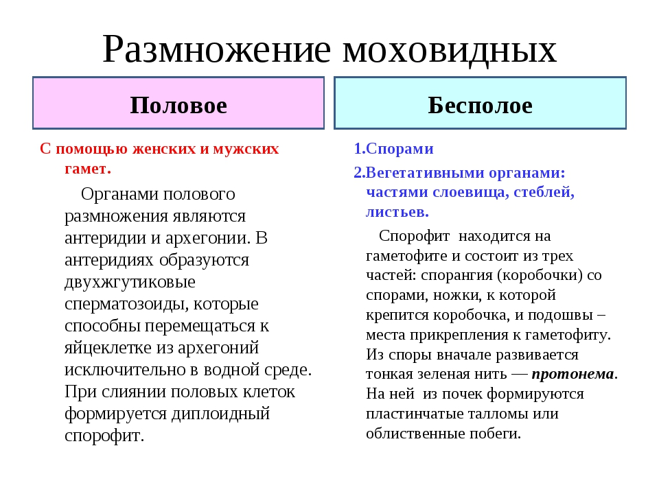 Размножение моховидных С помощью женских и мужских гамет. Органами полового р...