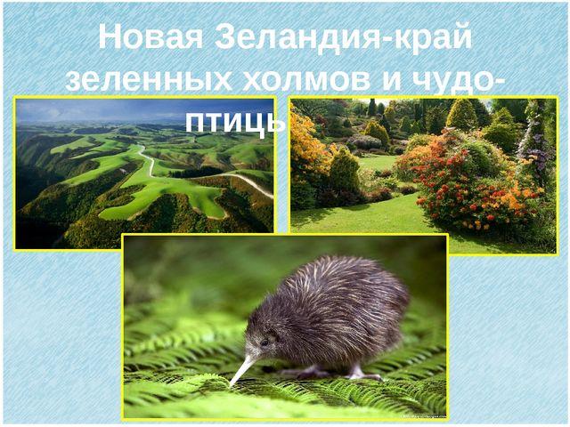 Новая Зеландия-край зеленных холмов и чудо-птицы киви