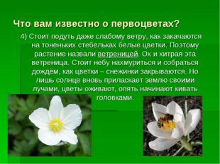 Что вам известно о первоцветах? 4) Стоит подуть даже слабому ветру, как закач