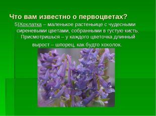 Что вам известно о первоцветах? 5)Хохлатка – маленькое растеньице с чудесными