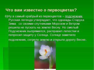 Что вам известно о первоцветах? 6)Ну а самый храбрый из первоцветов – подснеж