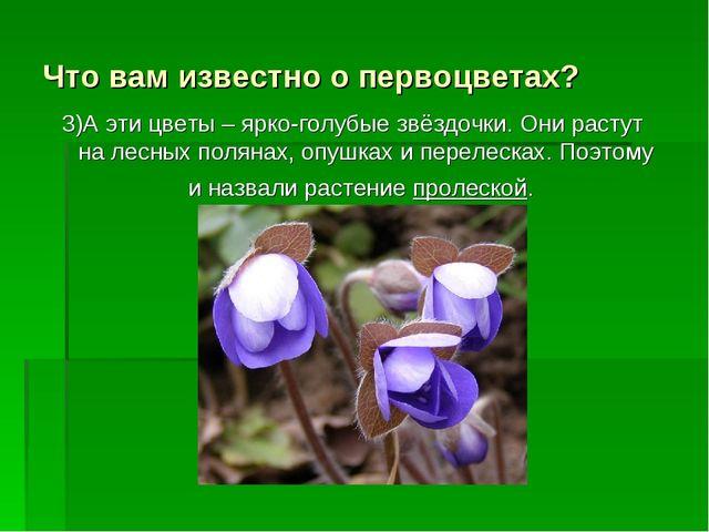 Что вам известно о первоцветах? 3)А эти цветы – ярко-голубые звёздочки. Они р...